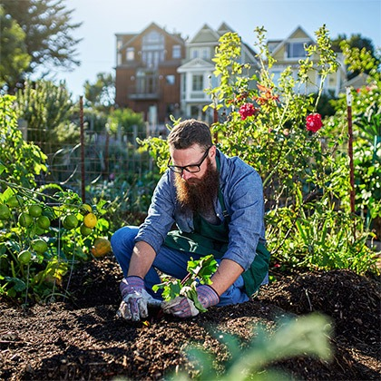 Plantação e Sementeiras