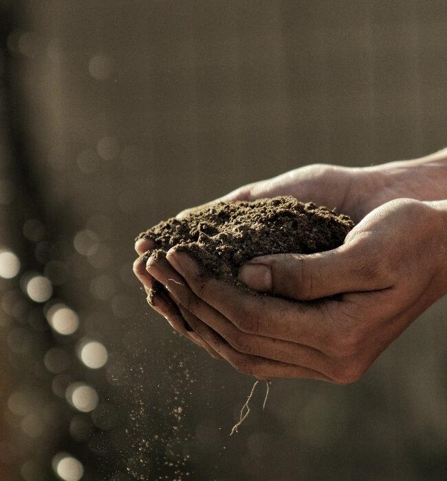 empresa de jardinagem especializada manutenção de jardins